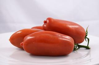 Tomat San Marzano IT
